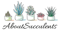 About Succulents
