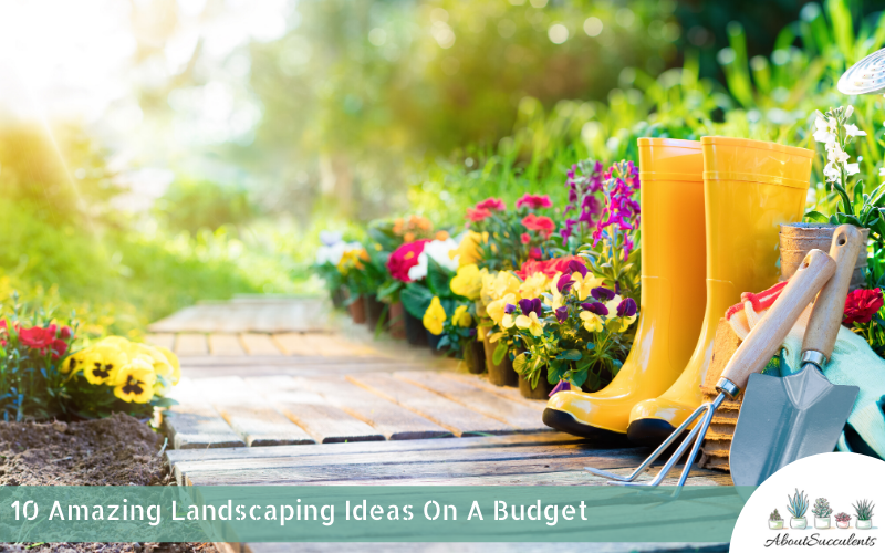 best landscaping ideas on a budget